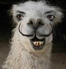 Crazy_Llama's avatar
