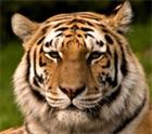 View tigereye504's Profile