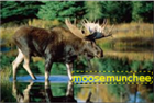 moosemunchee's avatar