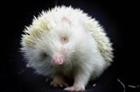 View Thecyberhedgehog's Profile