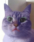 KittyCatz8484's avatar