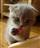 Kel007's avatar