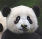 DAK9's avatar