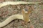 View cobra234's Profile