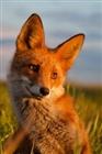 foxjcon's avatar