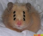 View Evil_Hamster's Profile