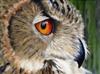 Mobius762's avatar