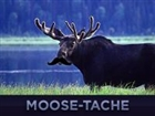 View Moosewood9's Profile
