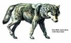 View Wolfie123456's Profile