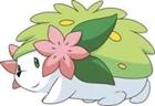 shaymin_rocks's avatar