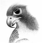 trentv4's avatar