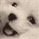 l00t's avatar