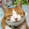 Hardmuscle's avatar