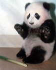 View ThePanda's Profile