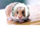 Einsteinshamster's avatar