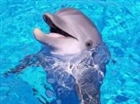nman76's avatar