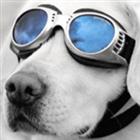 Tjold's avatar