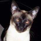 ImperatorFeles's avatar