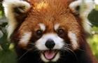 View PandamanRed's Profile