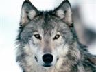 WedgedWolf's avatar