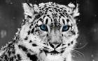 View BigLeopard's Profile