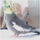 Pro_Ogidy's avatar