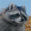 BigAlanM's avatar
