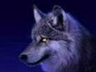 View MCwolfie's Profile