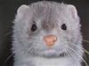 Makintosh's avatar