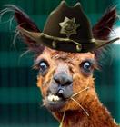 _blazedew_'s avatar