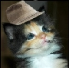 View CATSwithHATS's Profile