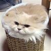 I_am_a_Jayhawk's avatar