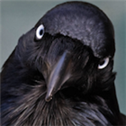 View Grinningcrow's Profile
