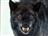 Wolfhusband's avatar