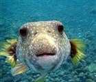 waterlubber's avatar