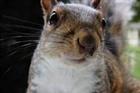 Kbsquirrel10's avatar