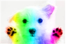 RainbowPuppy152's avatar