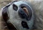 View PaulSloth's Profile