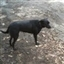 dogseatpopcorn's avatar