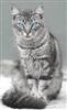 kitty88s's avatar