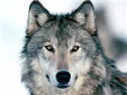 View The_Wolf7521's Profile