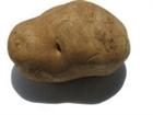 View The_Phantom_Potato's Profile