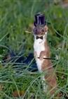 View ferret189's Profile