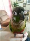 View birdfeets's Profile