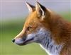 MysteriousFox111822's avatar