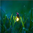 View Firefly1337's Profile
