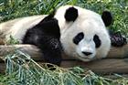 View panda_gg's Profile