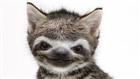 View slothhq's Profile