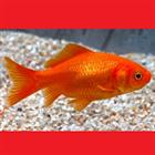 wolfrahm's avatar