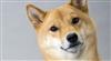 The_Shiba_Inu's avatar
